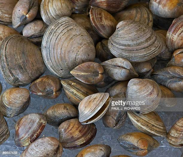 Clams for sale at the Maine Avenue Fish market in Washington DC July 31 2009 AFP Photo/Paul J Richards