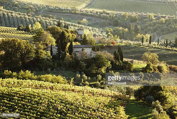 Classic Italian landscape of vineyards and fields