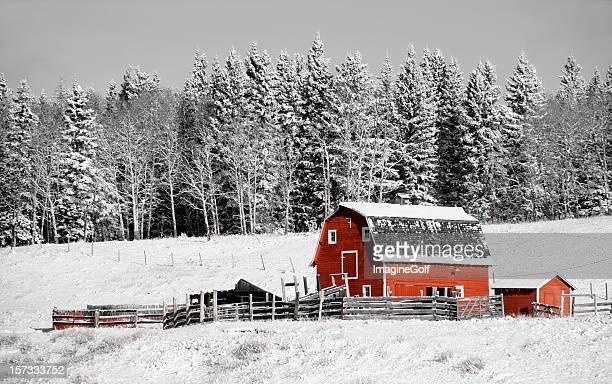 Classico rosso di un fienile in inverno