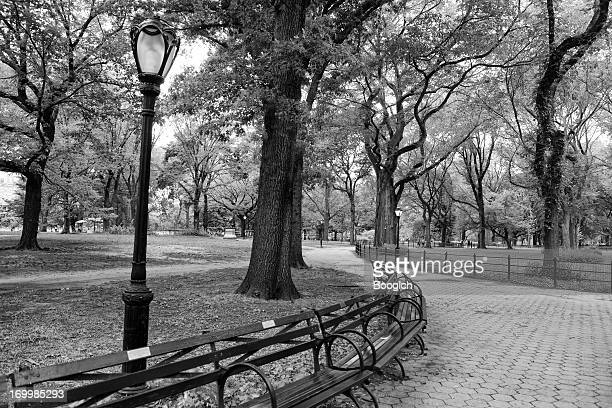 Classic Urban Landscape Central Park Benches New York City