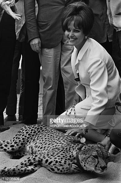 Claudia Cardinale posed next to 'Le Guepard' at Film Festival in CannesFrance on May 20th1963