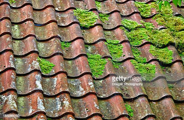 Clay Roof Tiles and Moss