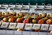 Clean and fresh apples on conveyor belt in food processing facility, ready for automated packing. Healthy fruits, food production and automated food industry concept.