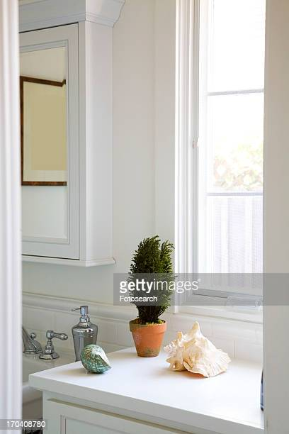 Clean half bathroom with plant