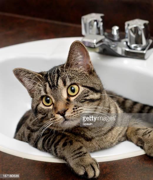 Reinigen Sie Kitty!