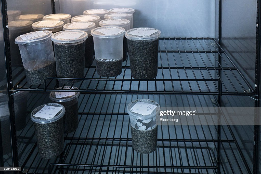 Cleaned black caviar eggs sit in a refrigerated cabinet before tinning at the OOO-SRP Osetr aquatic farm in Ukrainka, Ukraine, on Thursday, May 5, 2016. When Russia imposed a trade embargo on imported foods in 2014, caviar was spared from the list. Photographer: Vincent Mundy/Bloomberg via Getty Images