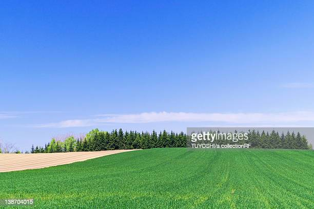 Clear Blue Sky Over Field in Spring