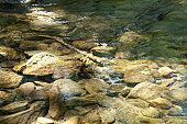 Clear river with rocks