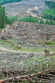 Clearcut on mountainside in Washington state