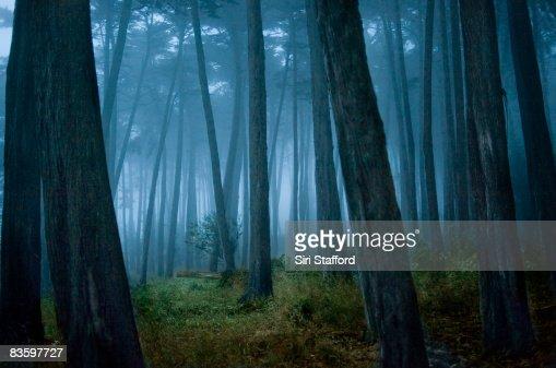 Rechteklärung in Cypress tree forest : Stock-Foto