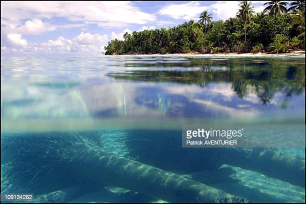 Climate Warming And Water Rise Threaten Pacific Nation Of Tuvalu On January 4Th 2002 In Funafuti Tuvalu Coconut Tree In The Lagoon Of Funafuti