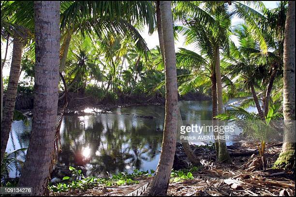 Climate Warming And Water Rise Threaten Pacific Nation Of Tuvalu On January 4Th 2002 In Funafuti Tuvalu 04/00/2002 Climate Warming And Water Rise...