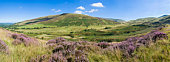 Heather, lush green hills and clear blue sky. Stitched panorama, detailed when viewed large.