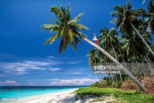 Climbing a coconut palm