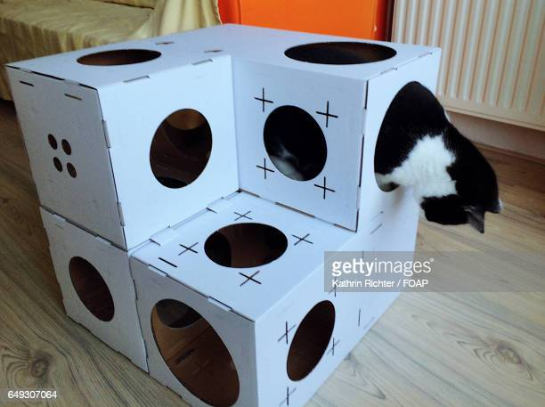 Climbing boxes for cats