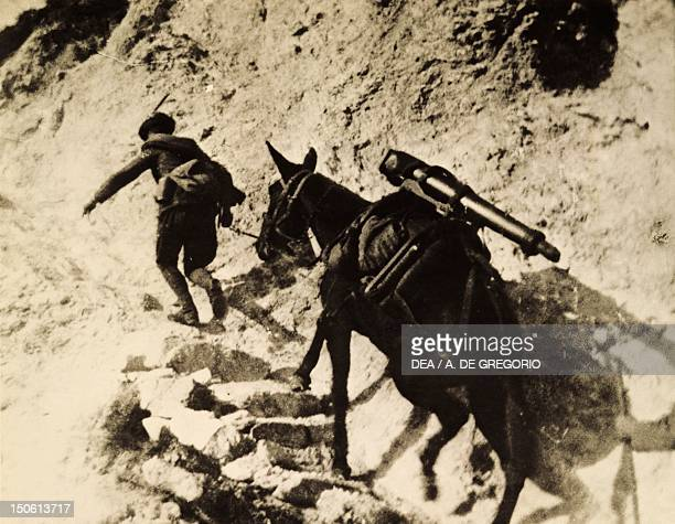 Climbing the Alps by mule on the high trails of the Isonzo front World War I Italy 20th century