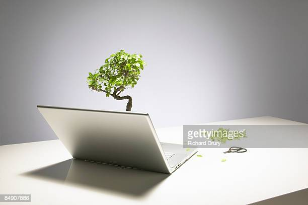 Clipped bonsai tree growing from laptop