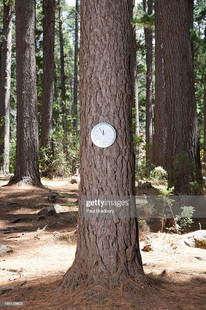 Clock on tree in forest : Stock Photo