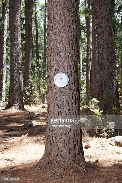 Clock on tree in forest