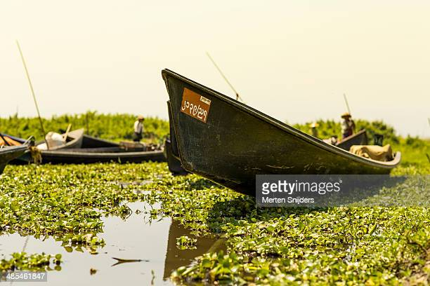 Clogged up side river of Inle lake