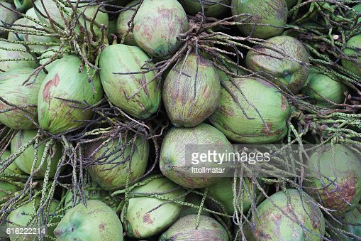close up a group of green coconut fruit : Stockfoto