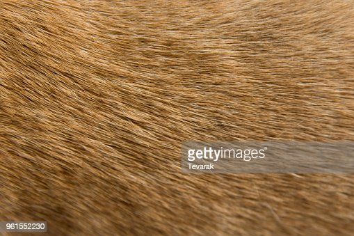 Close up Brown dog fur background : Stock Photo