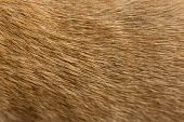 Close up Brown dog fur background