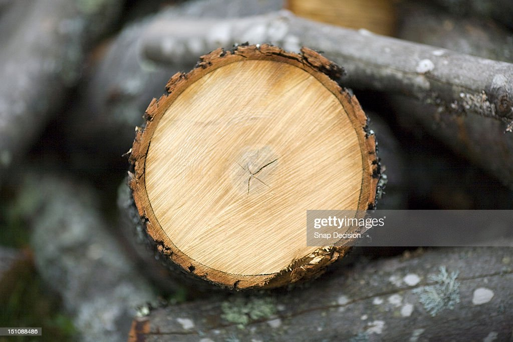 Close up detail of cut timber : Stock Photo