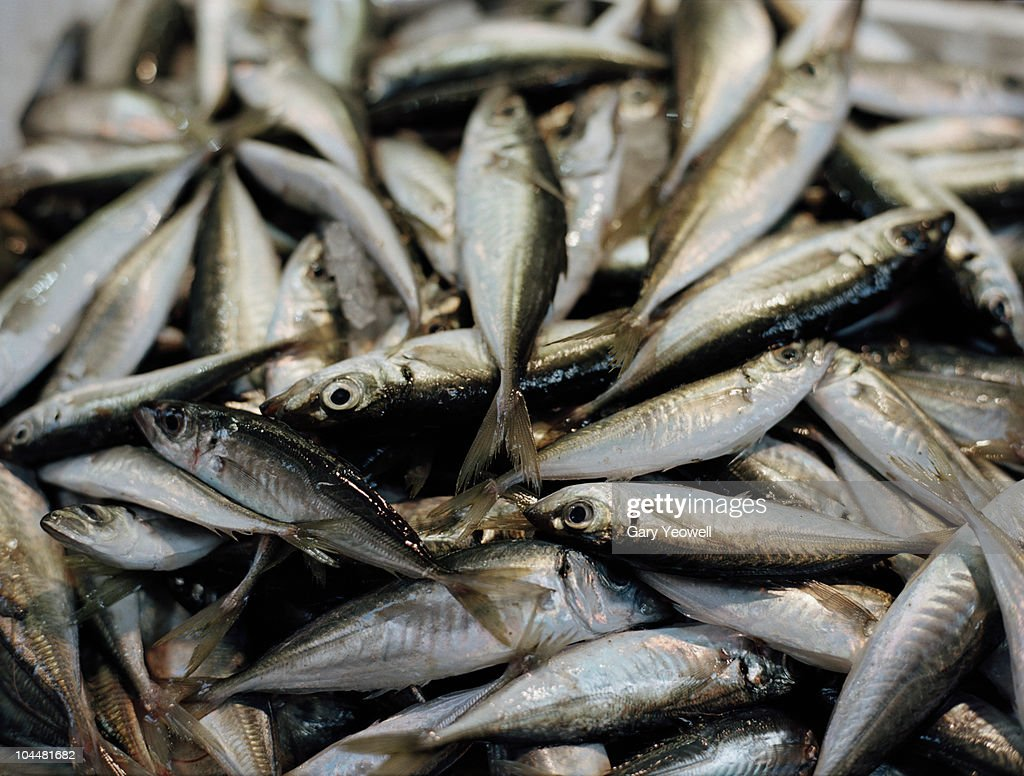 Close up detail of fish in a market  : Stock Photo