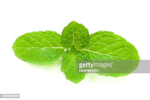 close up fresh mint : Stock Photo