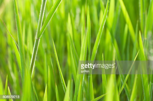 Close up grass : Stock Photo
