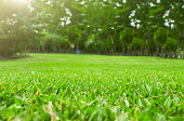 Close up green grass field with tree blur park background,Spring and summer concept.