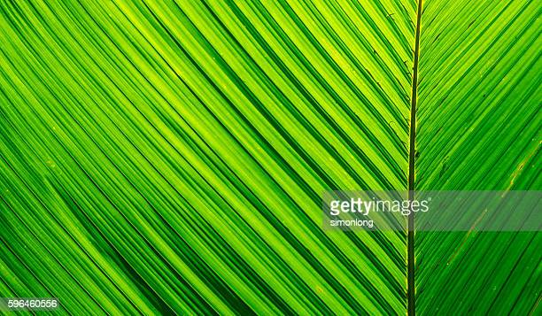 Close up green leaf texture, pattern leaf texture abstract background