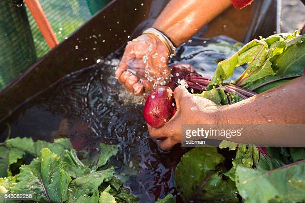 Close up hands African Woman Washing vegetables running water