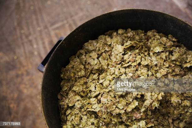 Close up high angle view of some dried hops in a container in a brewery.