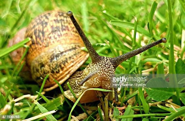 Close up image of a snail in dewy grass