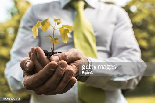 Close up of a businessman holding a plant in hands. : Stock Photo