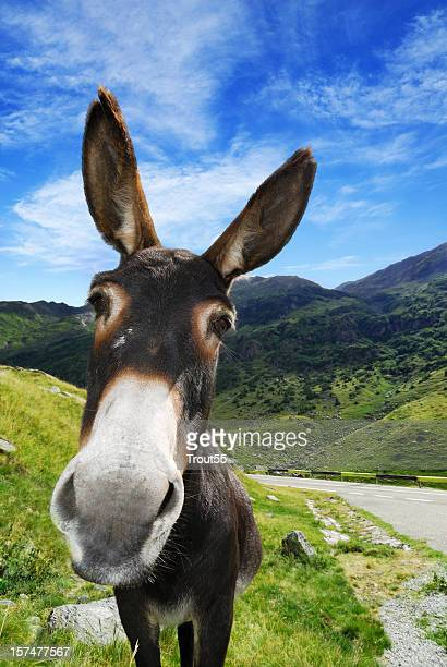 A close up of a donkey up a hill
