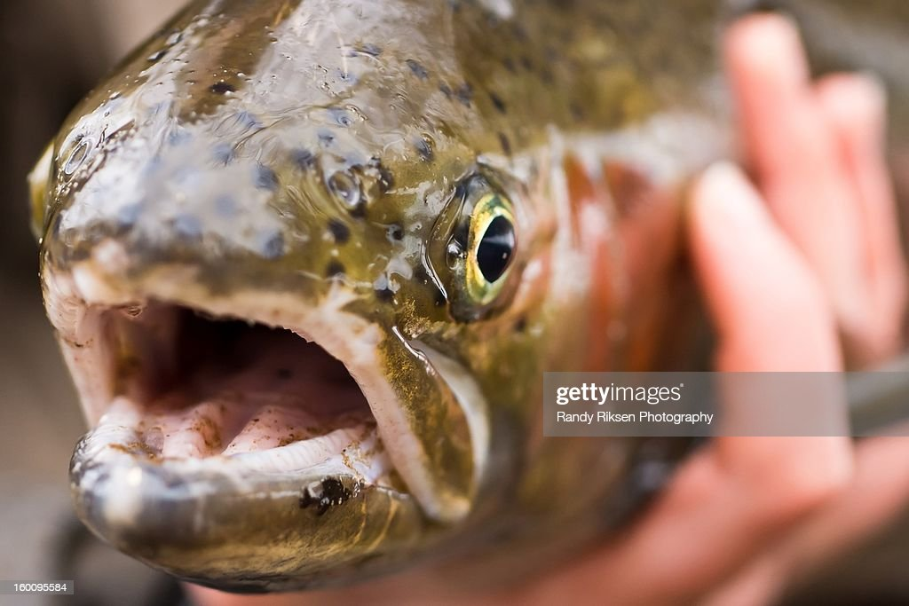 Close up of a fish head : Stock Photo