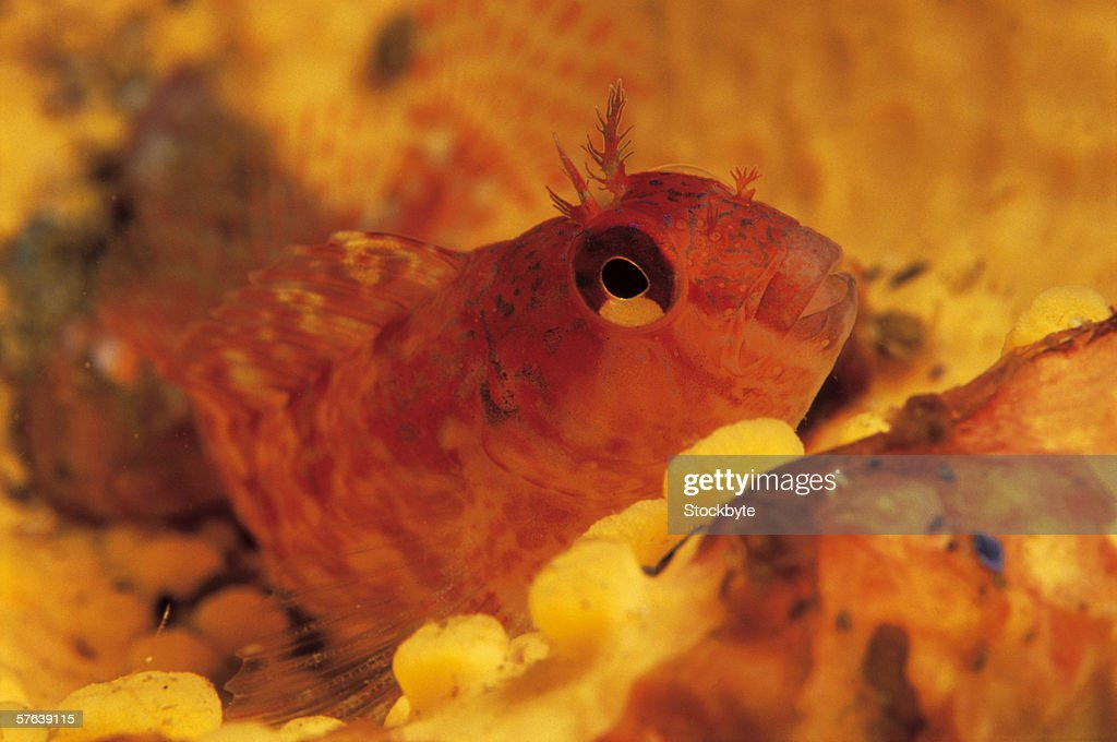 close up of a fish in the sea : Stock Photo