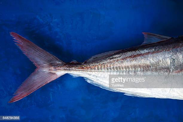 Close up of a fish tail on a blue background