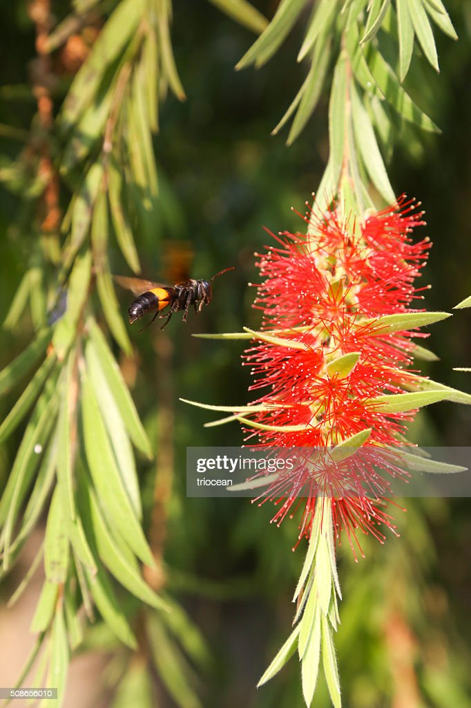 Close up of a insect next to the red flower : Stock Photo