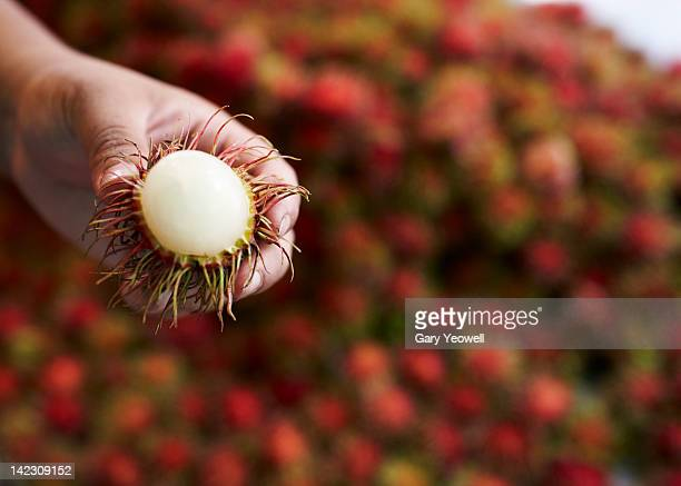 Close up of a person holding Rambutan fruit