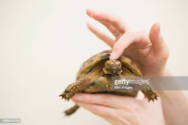 Close up of a persons hand holding a tortoise.