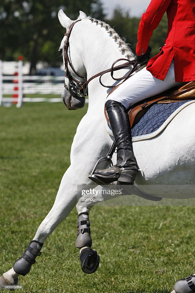 Close up of a show jumping horse
