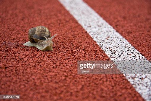 Close up of a snail on a race track