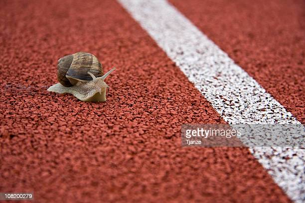 Close up of a snail on a race track