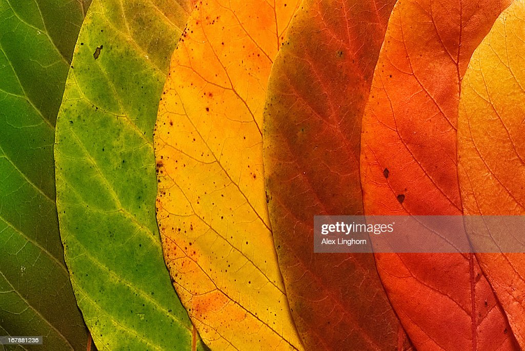 Close up of a variety of autumn leaves