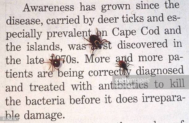 Close Up Of An Adult Female Deer Tick Dog Tick And A Lone Star Tick Are Shown June 15 2001 On Book Print Ticks Cause An Acute Inflammatory Disease...