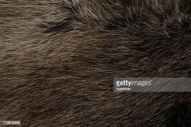 Close up of an animals brown fur